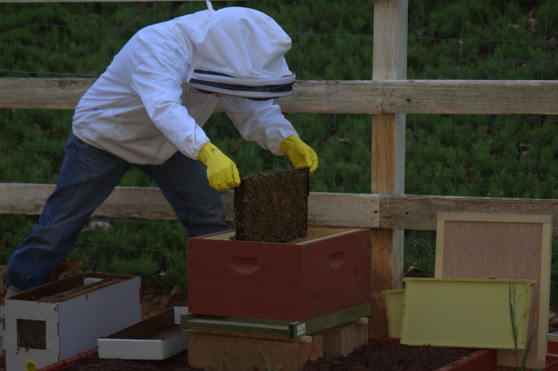 Healthy frame of bees