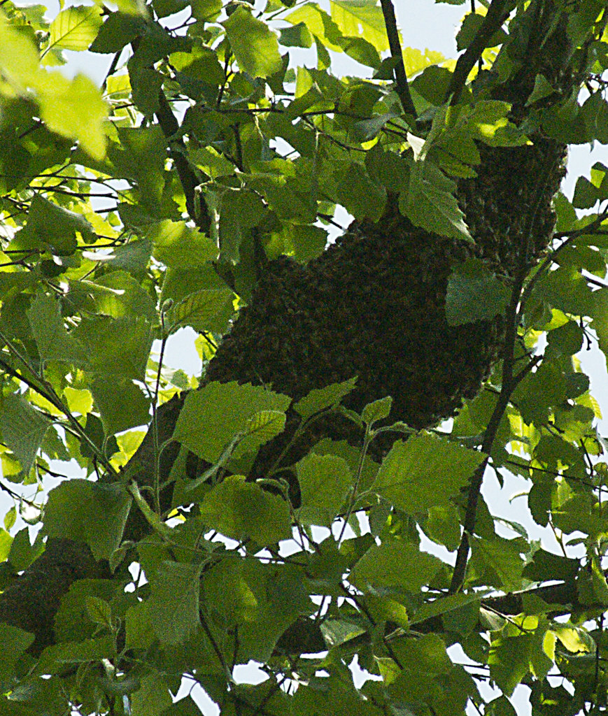 Enlarged view of the swarm