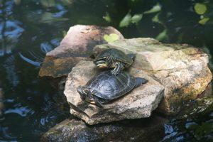 Turtles tag